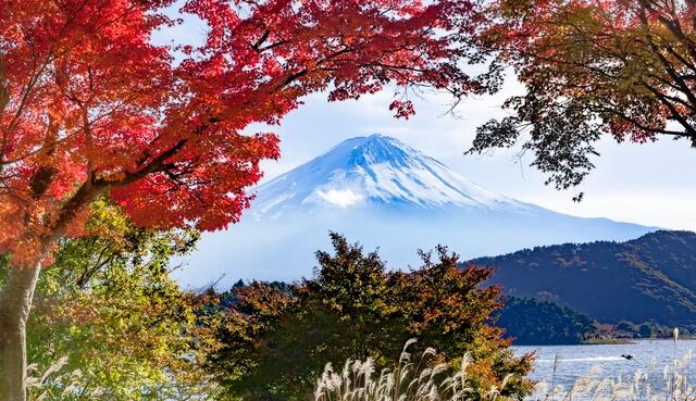 Fuji and autumn leaves, in Kawaguchiko, Yamanashi prefecture