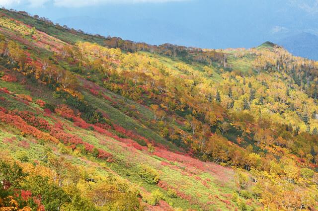 Autumn leaves of Ginsendai (Hokkaido, Kamikawa Town, Daisetsuzan)